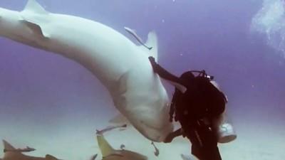 「掌心壓頭」惡鯊乖乖翻肚!潛水員自稱有神功,專家破解:誰都可以