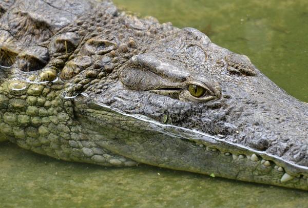 ▲鱷魚。(圖/達志影像/美聯社)