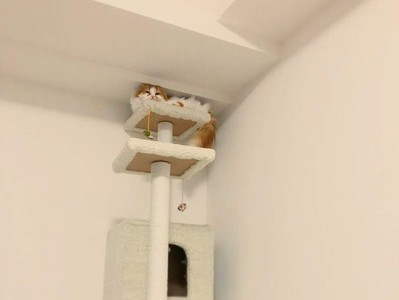 朕的位置在頂端!喵皇堅持站上貓跳台 只剩一咪咪也要擠好擠滿