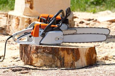 毒蟲盜伐木辯「臨時工帶鏈鋸很正常」