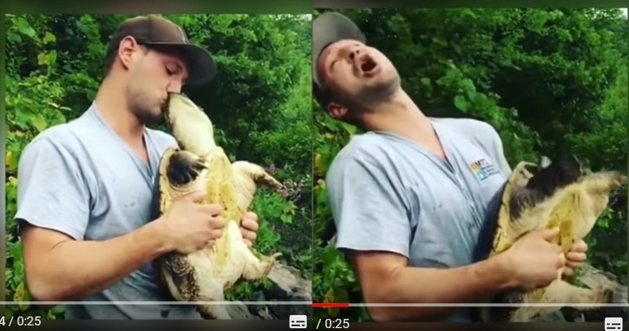 白目男熊抱擬鱷龜還強吻龜頭 遭反噬痛到慘叫。(圖/翻攝自Tim Turley的YouTube)