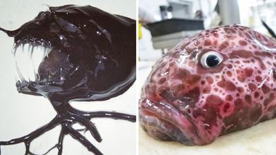 「深海異形」都逃不過他的魚網!北極圈漁夫twitter比百科全書精彩