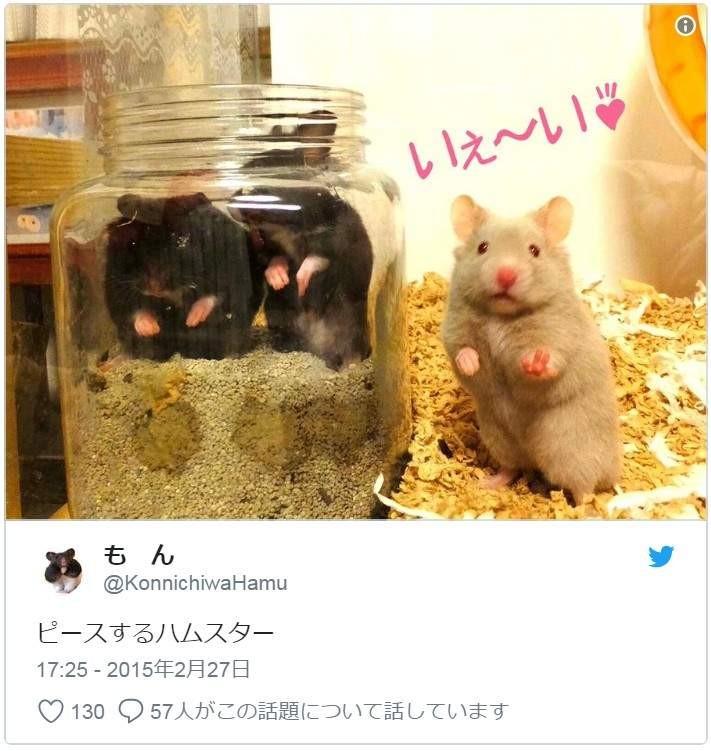 大檸檬用圖(圖/翻攝自推特@nnetsu)