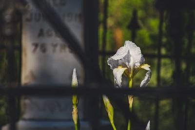 「跟老婆約好了」重情義女婿潛入殯儀館 偷抱走岳母屍體