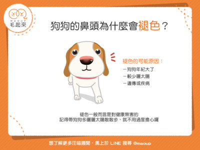 狗狗鼻頭褪色=生病?「3原因」曝光...沒以前黑正常啦!