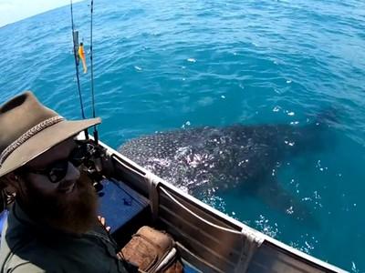 拜託摸我~鯨鯊寶寶「撞船討摸半小時」 感受人類手溫滿意遊走