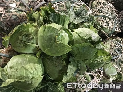 高麗菜1kg慘跌破5元 菜販嘆沒利潤
