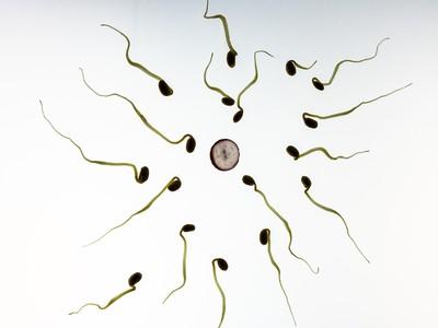 精蟲有救了!中醫療法「活動力增20%」