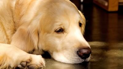 當安樂死針頭刺入「寵物在想什麼」 獸醫勸:請陪牠到最後一刻