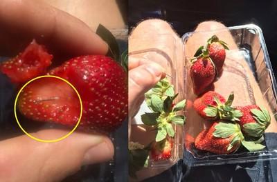 遏止水果藏針 澳超市停售縫衣針