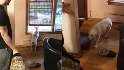 耳聾狗每天趴窗台 主人進門沒發現...「錯過迎接時間」眼神超愧疚