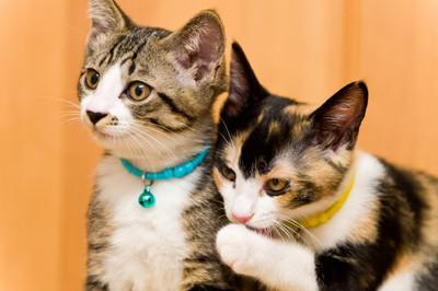 貓眼緊盯=把你當獵物?其實是偷開「喵雷達」 偵測到要去看醫生…快溜喔