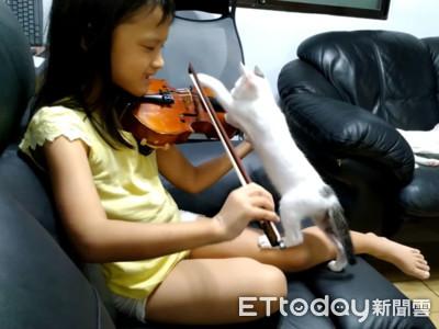 小貓有音樂夢 爬小提琴教「弓法」