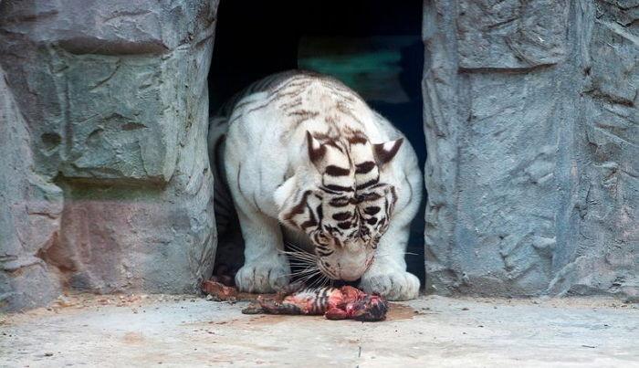 ▲▼北韓動物園(圖/取自Rowan Griffiths)