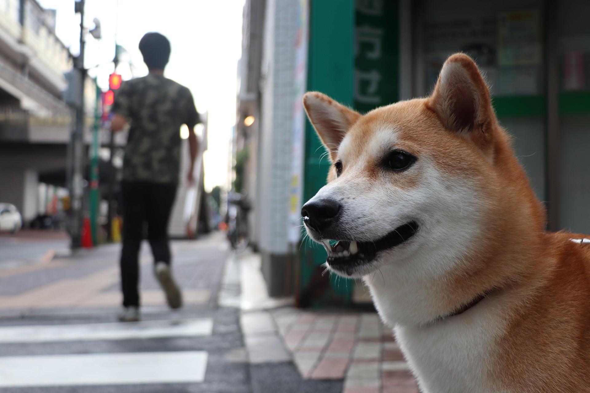 ▲▼狗咬傷路人(圖/Pixabay)