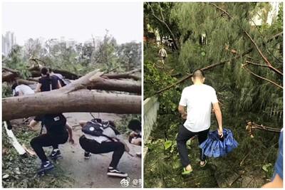 山竹掃深圳後 市民爬樹去工作