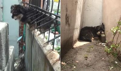 浪犬每天翻牆背後原因惹哭網友