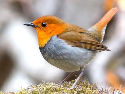 研究:北美洲鳥類50年少近30億隻