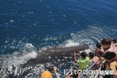 抹香鯨換氣噴水 遊客被噴一身濕