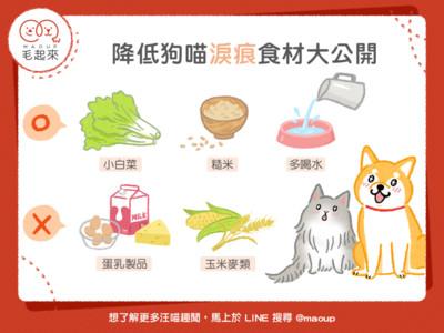 「降低狗喵淚痕」食材大公開!多喝水、避免蛋乳製品超有效