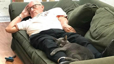 義工爺幫梳毛...當機度估! 「貓皇陪他睡」醒來募到百萬元