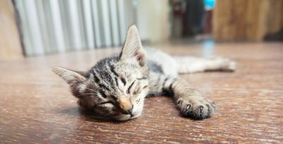 女研究生寫萬字論文:吸貓如吸毒讓人上癮