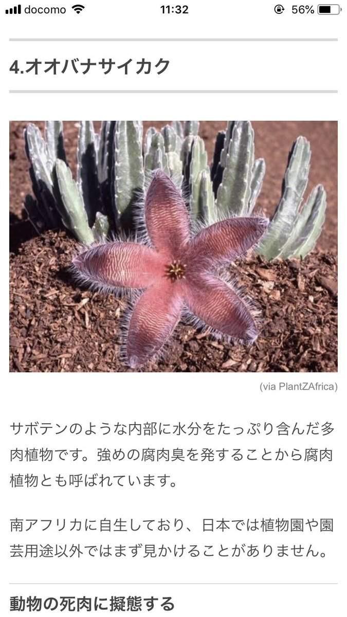 大檸檬用圖(圖/翻攝自推特@hokuro__)