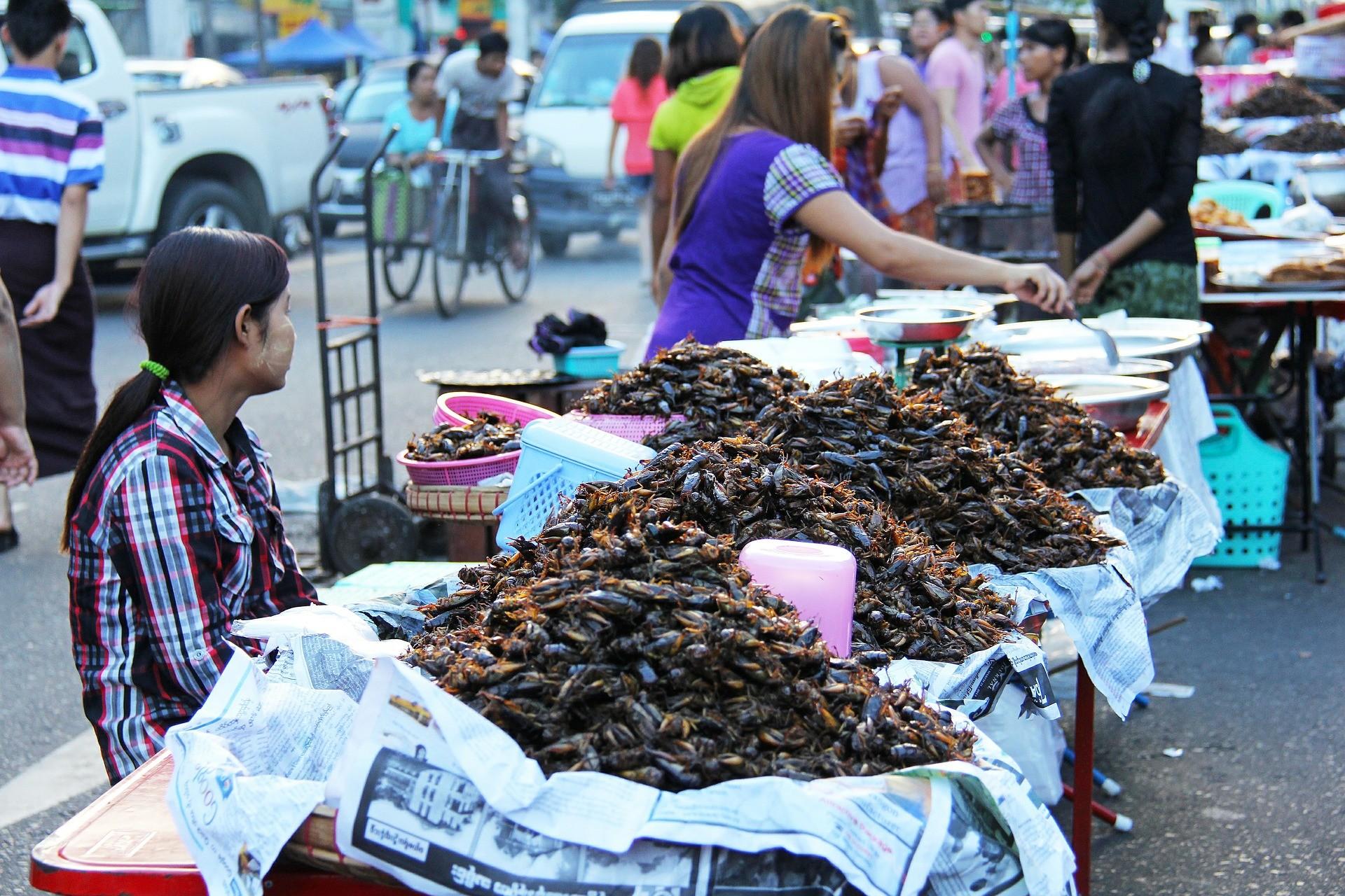▲▼炸蟑螂,蟑螂料理,東南亞,恐怖料理,炸昆蟲(圖/取自免費圖庫Pixabay)
