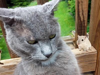 貓其實不愛抓老鼠!又賊又懶「喜歡更弱的獵物」,吃蟑螂卡滿意