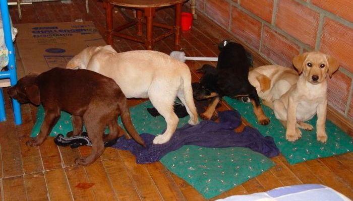 ▲▼Andres Lopez Elorez,運毒犬,剖腹(圖/翻攝自US Drug Enforcement Administration)