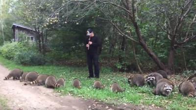 直笛吹出引獸咒! 樹林竄出20隻浣熊「圍成膜拜圈」入神聽笛聲