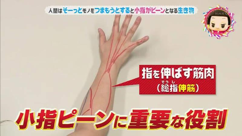 大檸檬用圖(圖/翻攝自NHK電視節圖)