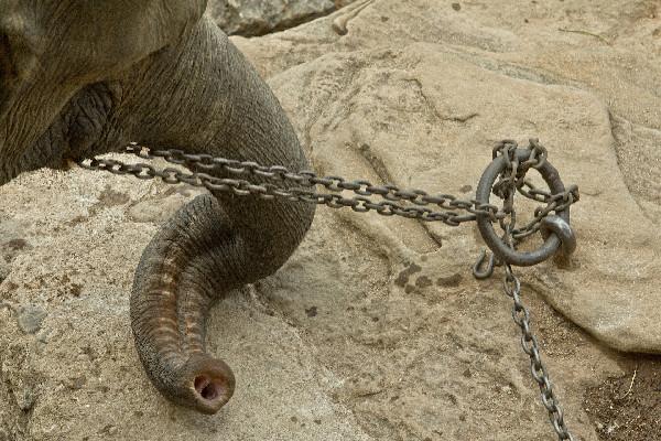 ▲大象旅遊業的背後。(圖/取自免費圖庫pixabay)
