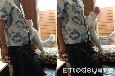 貓撲爸懷中上下嚕塞乃:鼻要走~