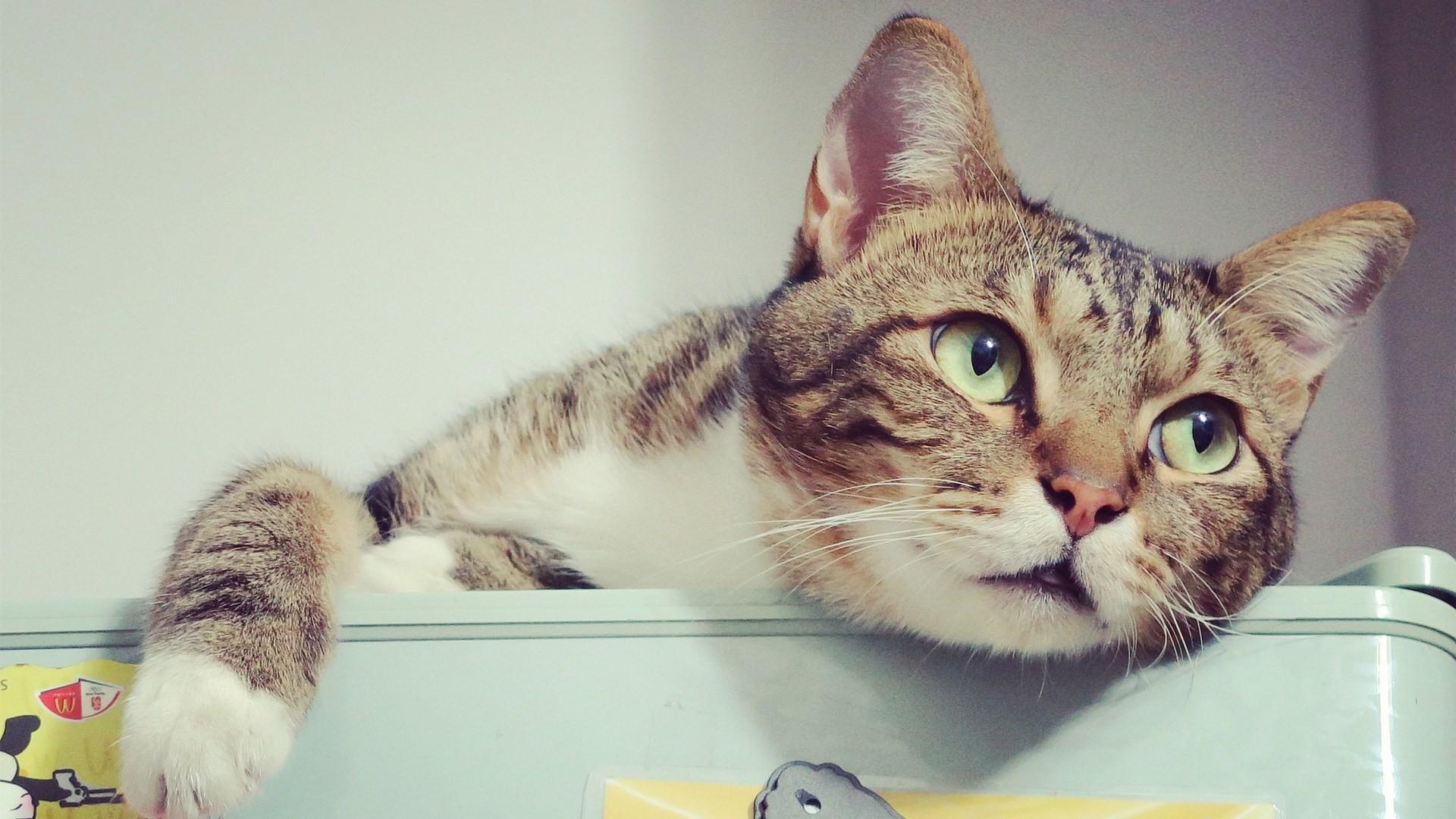 ▲▼貓咪示意圖。(圖/取自免費圖庫pixabay)
