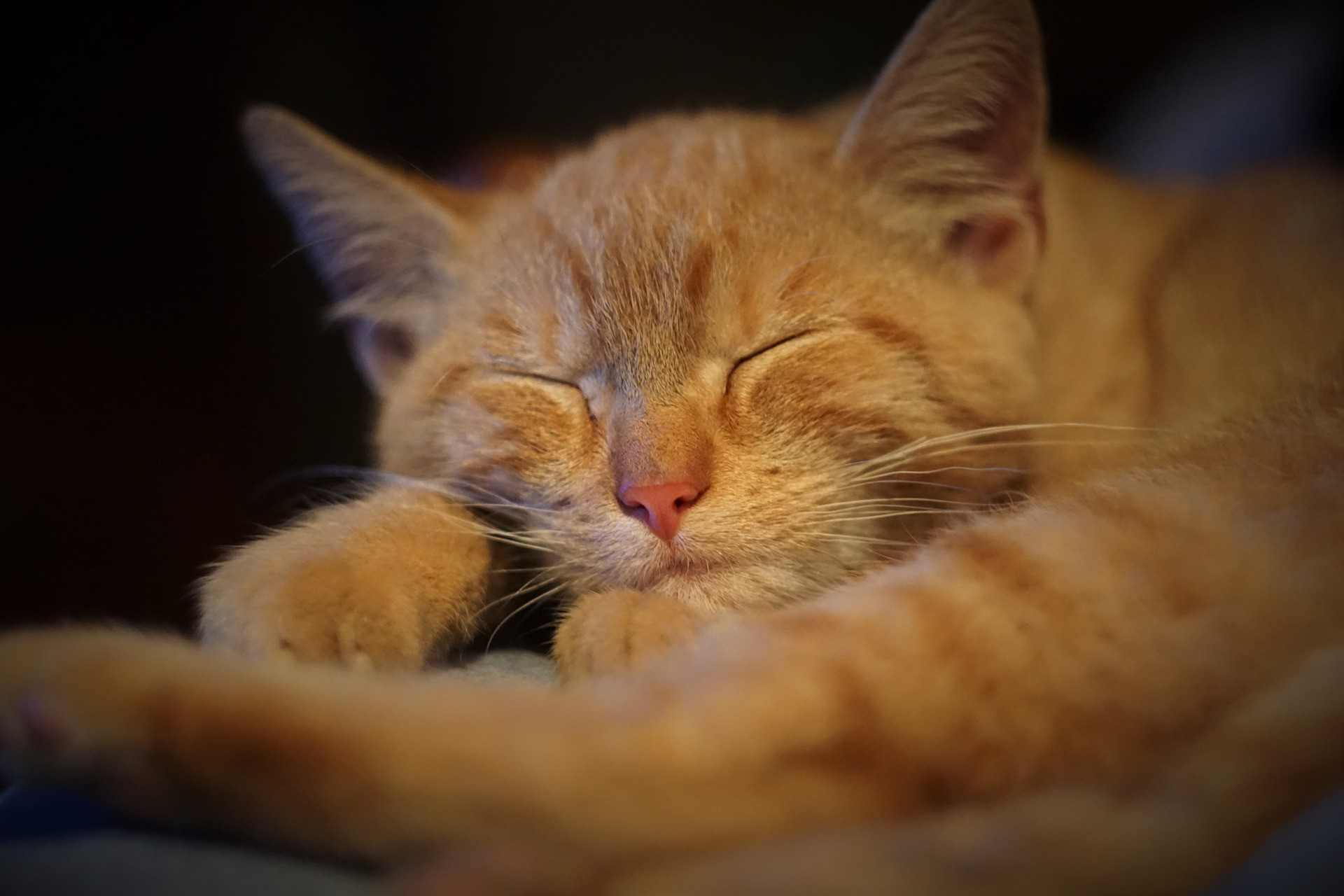 ▲▼睡謎癱瘓,鬼壓床(圖/取自Pixabay)