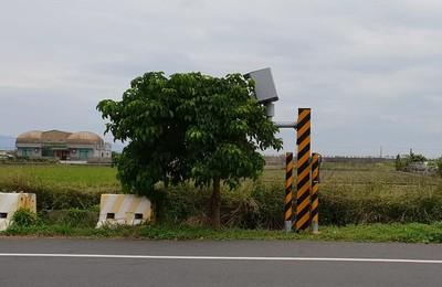 佛系超速器!鏡頭前1棵茄苳樹「擋好擋滿」