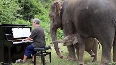 對著「殘疾老象」彈琴!鋼琴家定居叢林彈奏 樂章結束已被象鼻包圍
