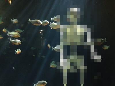 食人魚水槽赫見一具白骨! 日水族館貼出「飼育員尋人啟事」