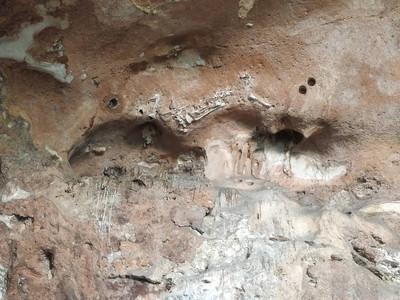東南亞最完整 馬來發現70萬年哺乳類化石