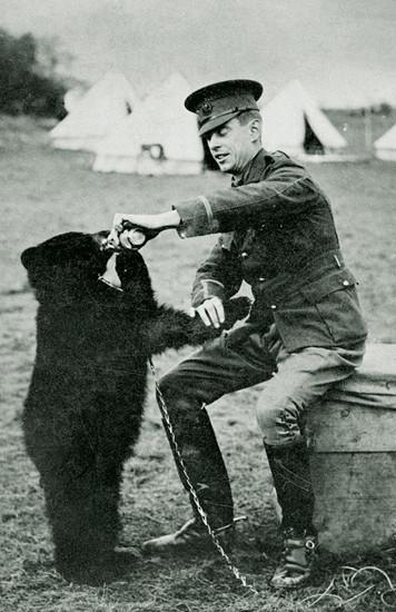 ▲▼維尼熊(圖/翻攝自維基百科)