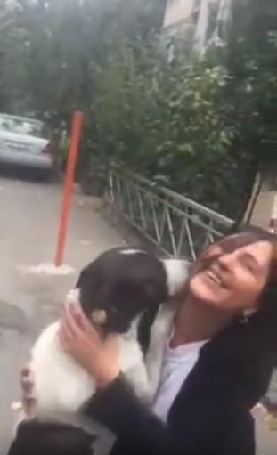▲▼ 走失三年的狗與主人相見歡。(圖/翻攝自YouTube/ViralHog)
