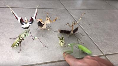 「螳螂戰隊」5成員集合完畢 大統領伸指試攻擊力:啊痛死