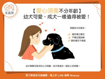 領養狗狗要挑成犬vs.幼犬?「3超優真相」告訴你老的才好啦~