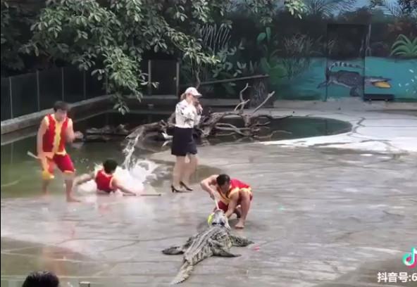▲▼鱷魚口塞氣球「別驚擾大師」…豬隊友秒摔 4人手刀逃跑:啊啊啊。(圖/翻攝抖音)
