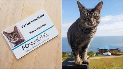 聘請貓皇擔任冰島飯店「抓鼠部主管」 貓生不易,自己的罐罐自己賺