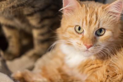 收容所變動物墳場 善心女被搜出64隻死貓