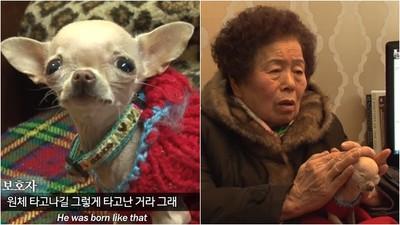 怕牠聽懂會害怕 老奶奶摀罕病愛犬雙耳等診斷 醫:活到現在是奇蹟