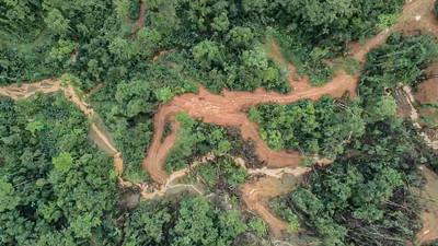 所羅門群島砍伐雨林超速20倍 因為大陸需求