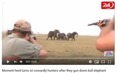 獵人射殺公象 遭暴怒象群追殺
